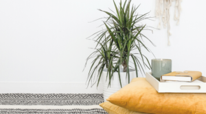 Image of a plant in a pot next to cushions for the blog post How to Lead a More Minimalist Lifestyle